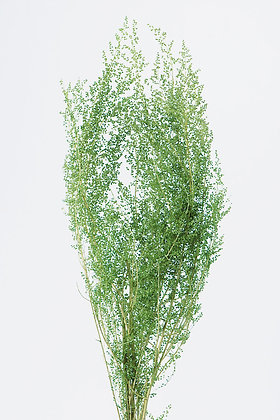 OHC-01090-700 Green Shower Glass