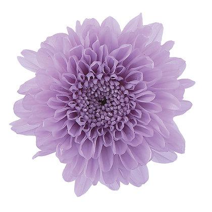 OHC-03680-451 Sweet Lilac Pompom