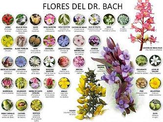 flores dificiles.jpg