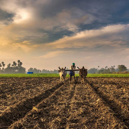 AGRICULTURAL REFORMS IN INDIA: SHALLOW MEASURES AND HOLLOW PROMISES