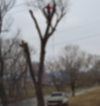 Przycinki i wycinki drzew
