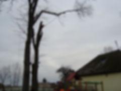 Wycinka sekcyjna drzewa nad liniami, dachami