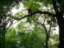 Pielęgnacja, przycinka i wycinka drzew