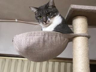 月に乗る猫ピアス