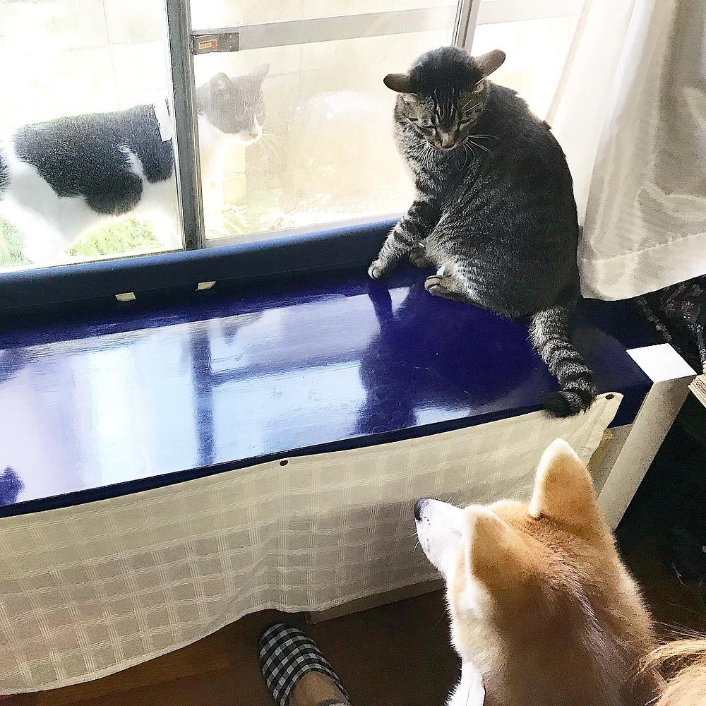 猫会議に参加