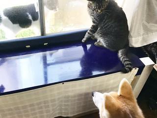 水晶貝と猫とヒトデ