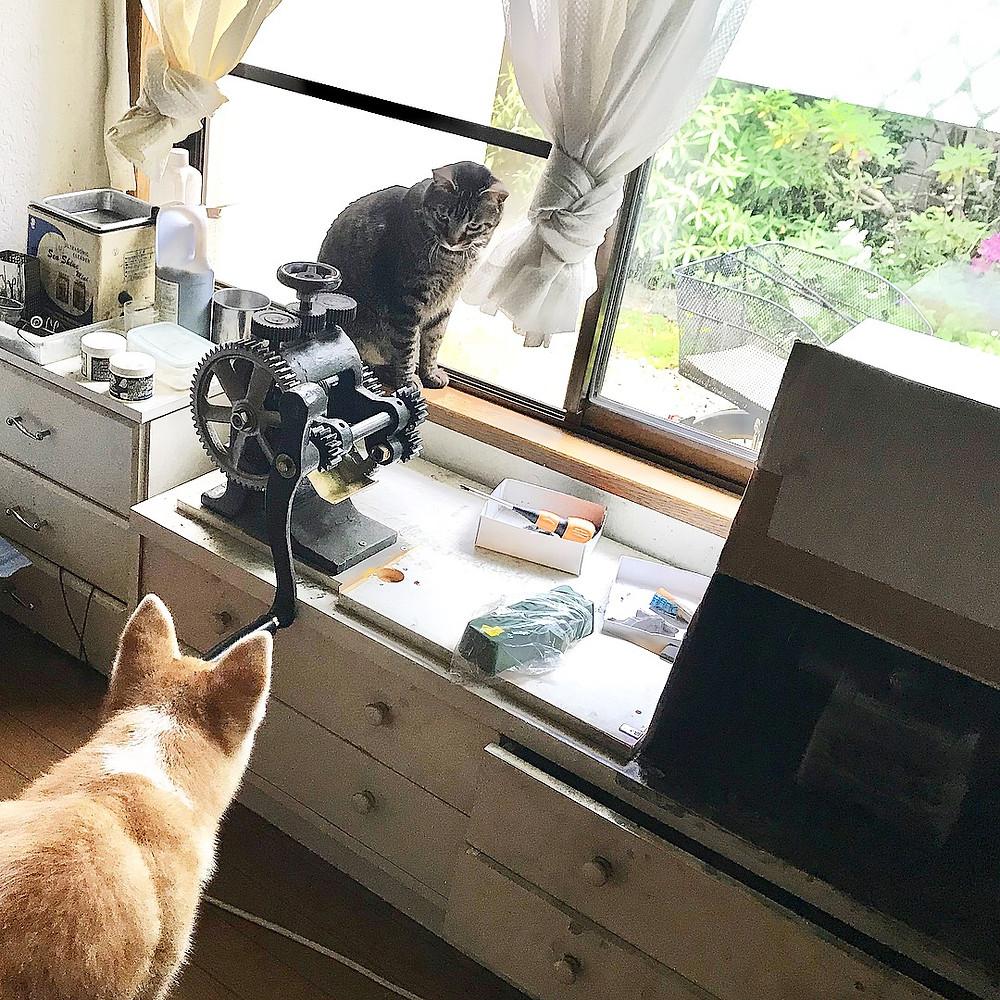秋田犬の金時 猫はちぃぷぅ