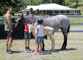 horseslinda-family.jpg