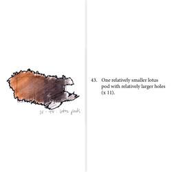 Colour study and description