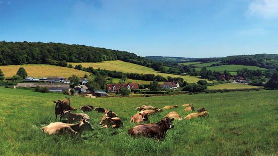 Minshull Hall farm