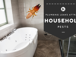 Bathroom Pests: watch out for these water lovin' bugs