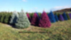 colored_trees.319113003_large.jpg