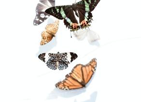 Vivendo em transformação