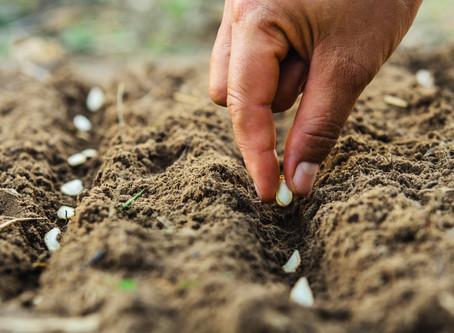 Have GMO seeds broken Gods law?