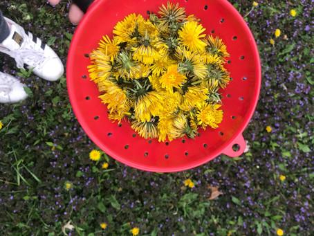 The Magic Of Dandelions