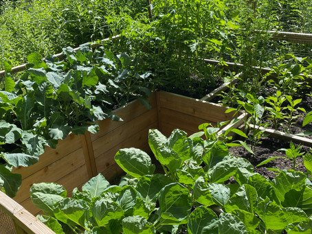 Making Chemical-Free Gardens The Norm Again