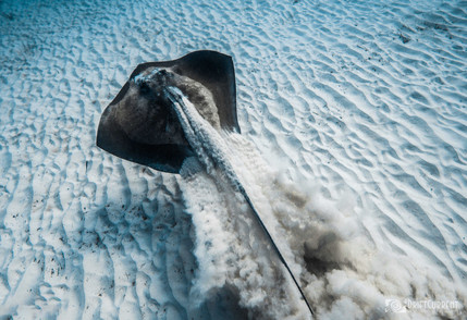 stingray.sand 1.jpg