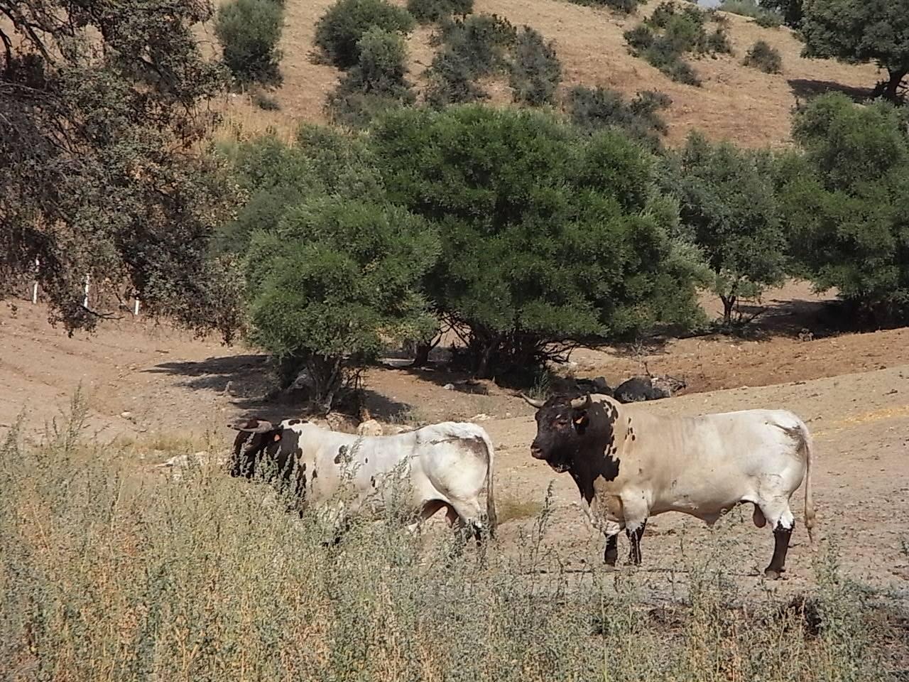 Toro rutabici