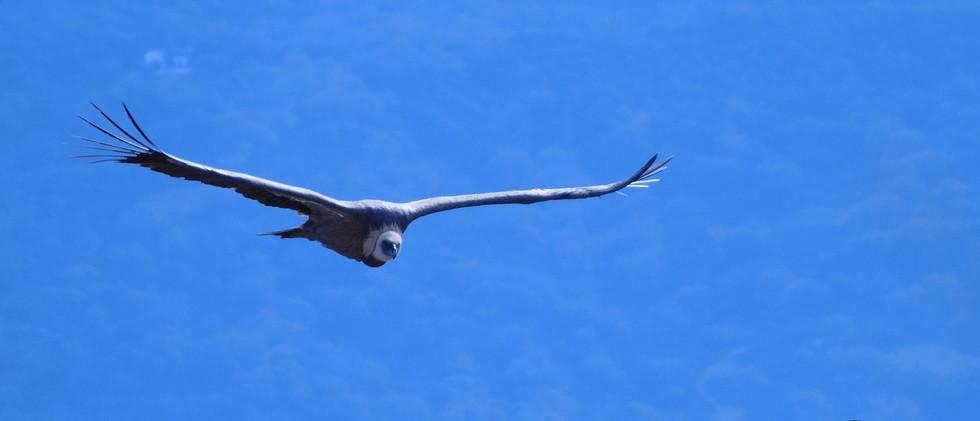 urubu-parapente.com  DSCN8696.JPG