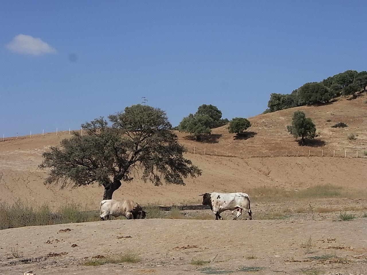 urubu parapente photo algodonales1 toro.