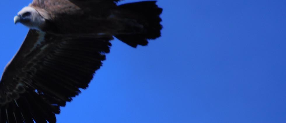 urubu-parapente.com  DSCN8717.JPG
