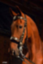 lucky parade bridle portrait.jpg