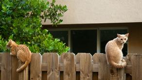 """РБК: """"Что делать, если забор соседа стоит не по кадастру."""""""