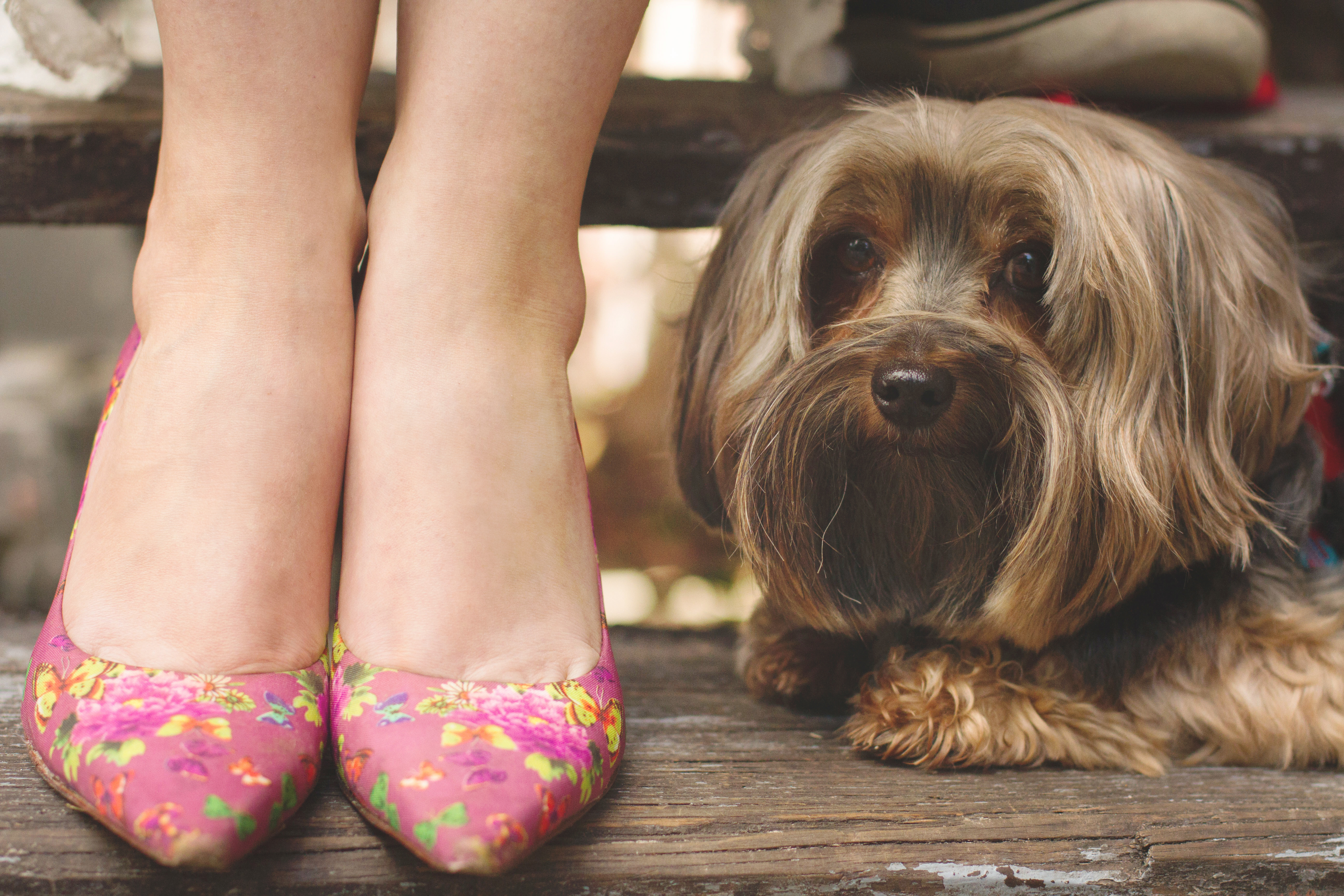 Engagement and family photographer with dog yorkie pup