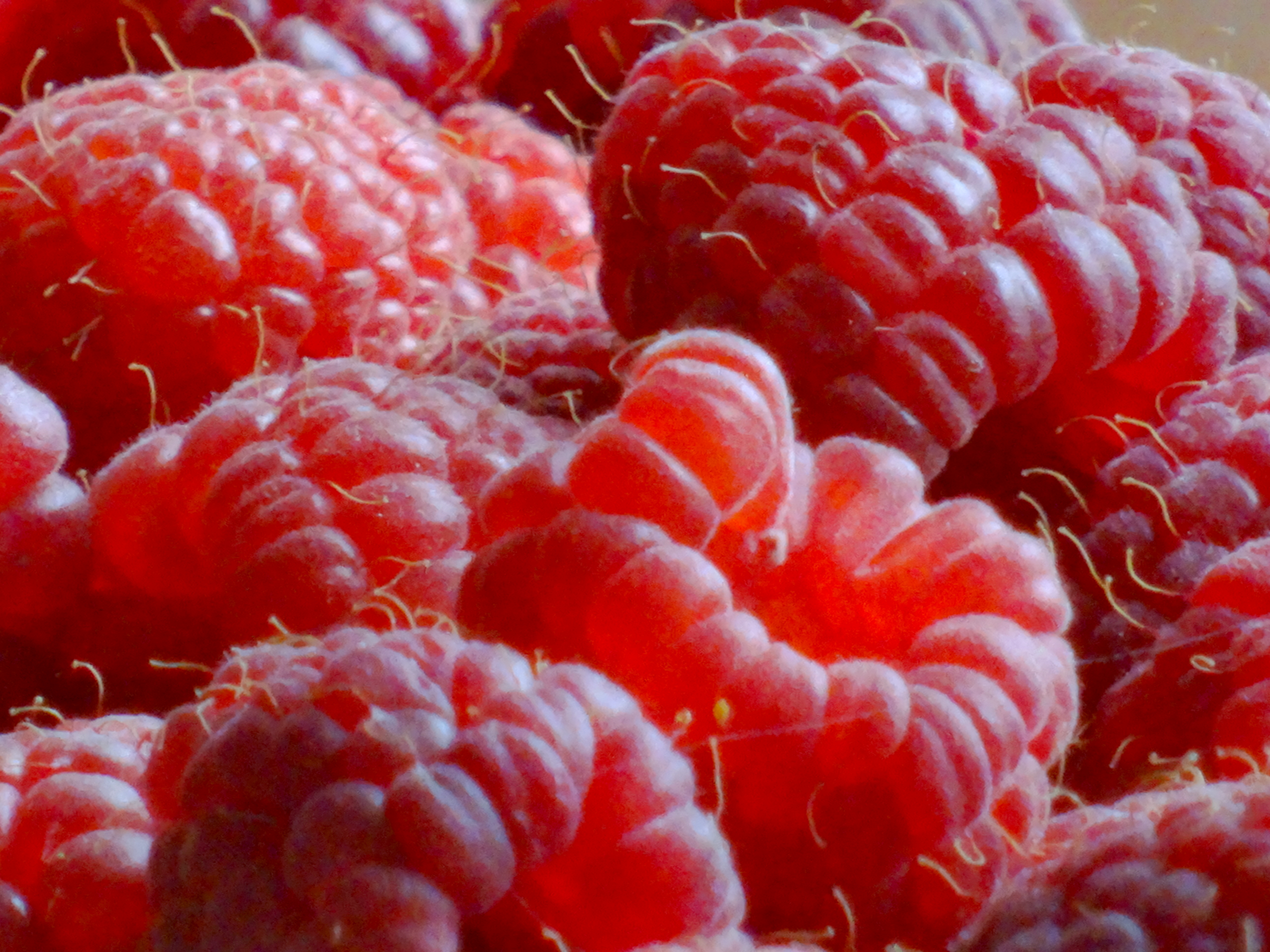 Pulpeuses framboises fruits rouges