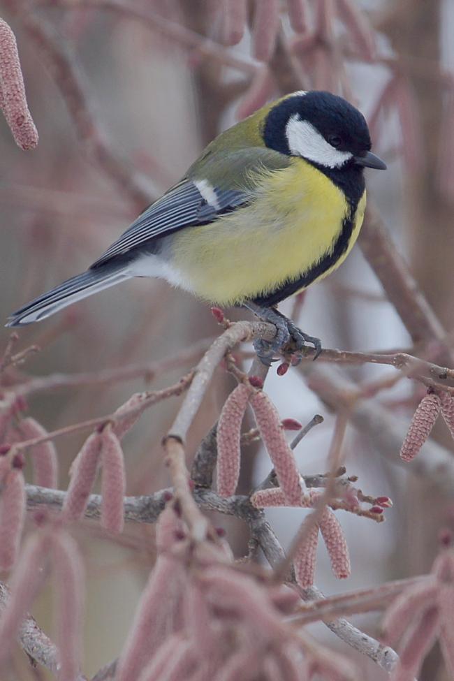 Blanc, gris, noir, jaune oiseau