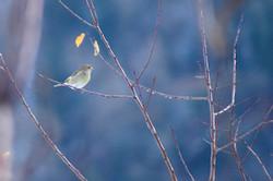 Les deux feuilles et l'oiseau