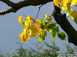 Grappes ou feuilles?