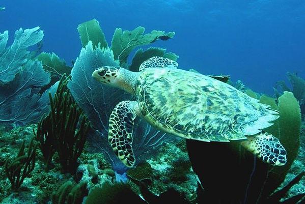 pebble_cove_turtle.jpg