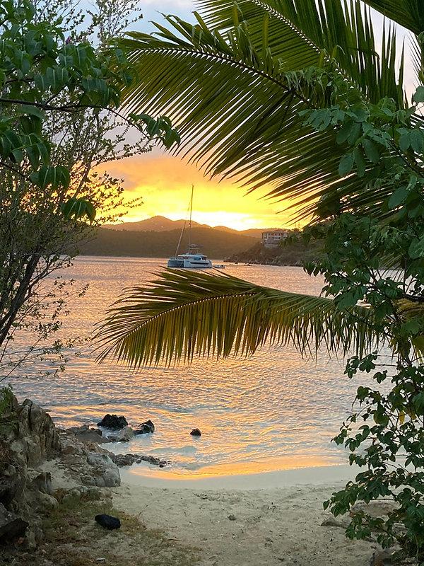 Hansen Sunset Palm.jpeg