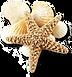 sea_shells_png_1218370.png