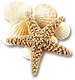 sea_shells_png_1218370.png