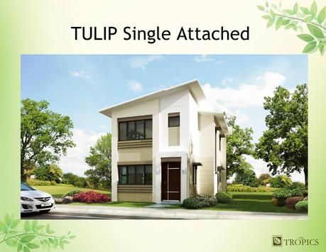 Tulip Modern Minimalist House