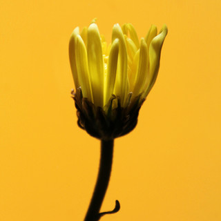 If You Love Yellow, This Is for You