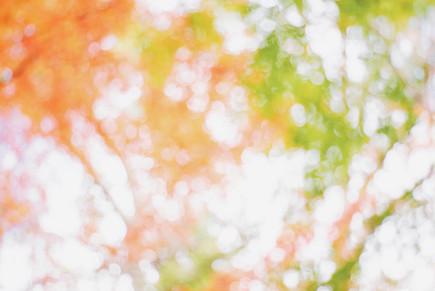 紅葉021light.jpg