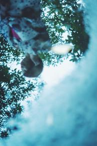 紫陽花020light.jpg