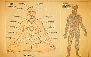 Chakra diagram at The Tree