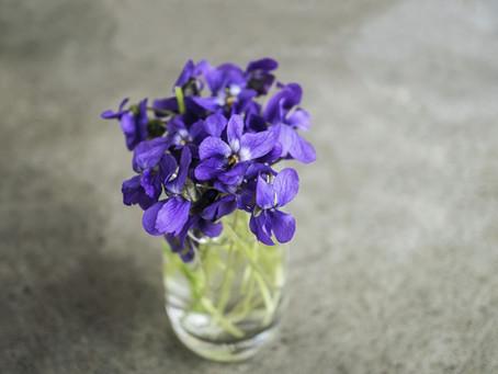 Das Veilchen (Viola odorata)