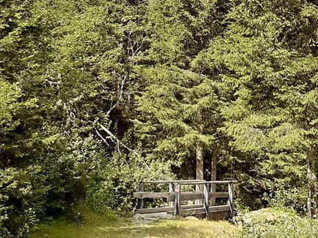 Schon einmal den Wald in die Badewanne geholt oder gar auf den Teller?