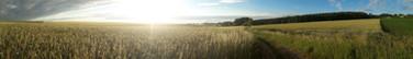 Panorama Getreide