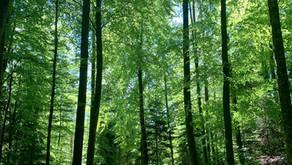 Se former aux métiers de la transition écologique