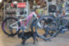 Scott Bike Dealer Asheville, NC