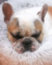 sleepyventoux1wsite.jpg