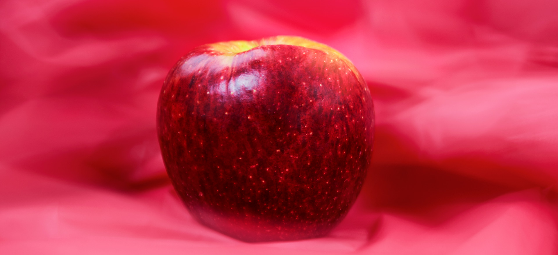 Time-Lost Apple(Limited Edition of 1)