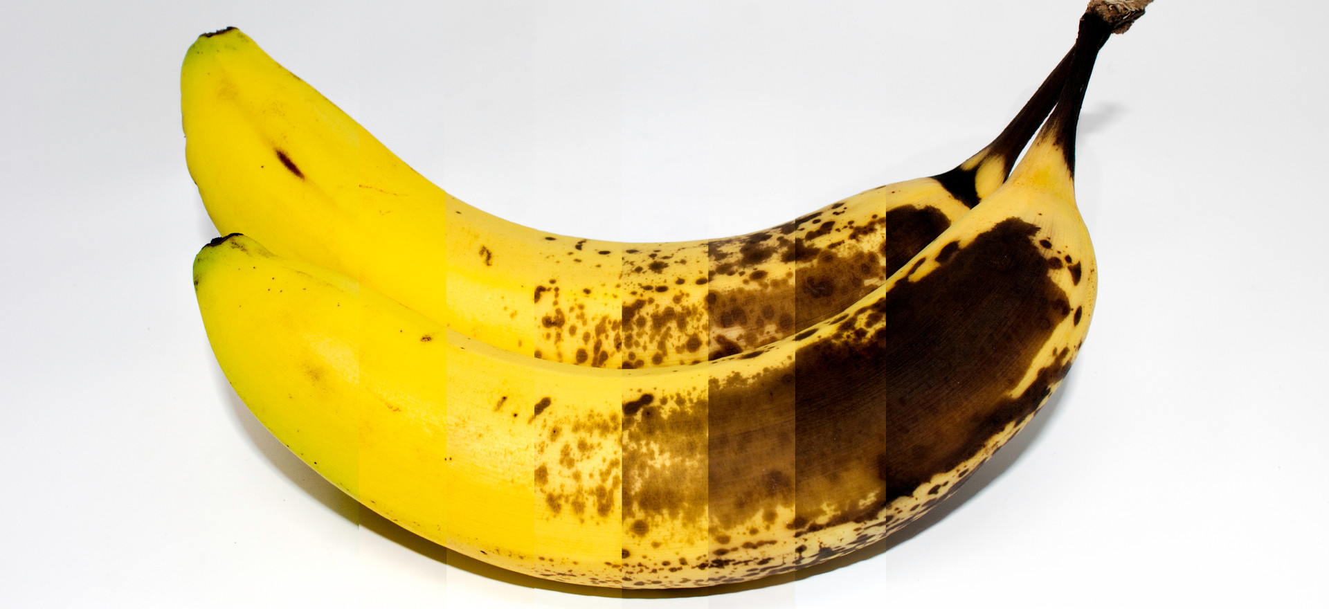 Time-Lost banana(Limited Edition of 1)