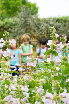 spring-wild flower center